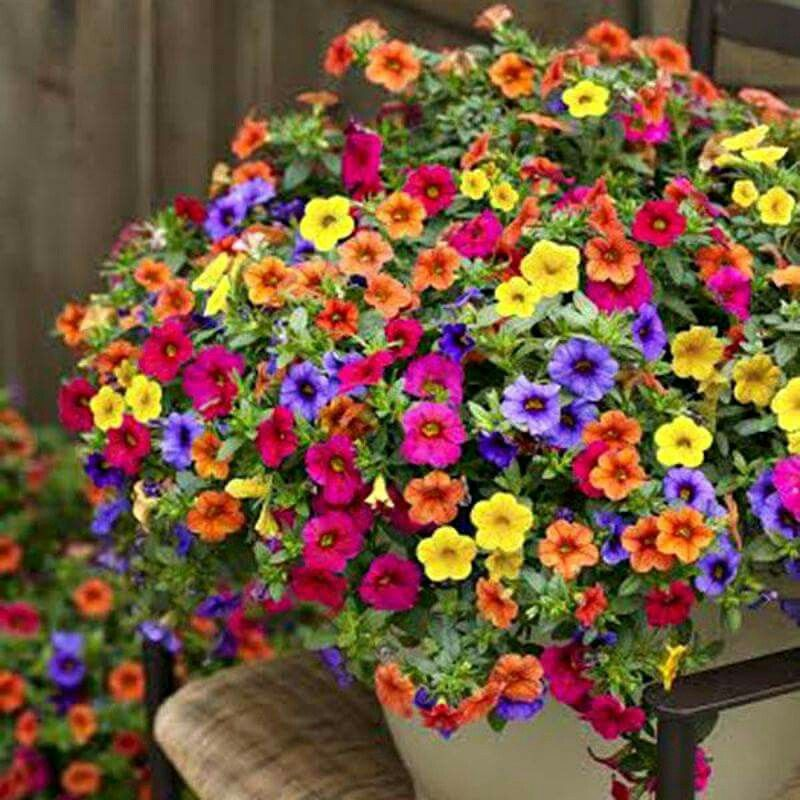 Million bells gardening indoor and outdoor pinterest for Colorful hanging planters