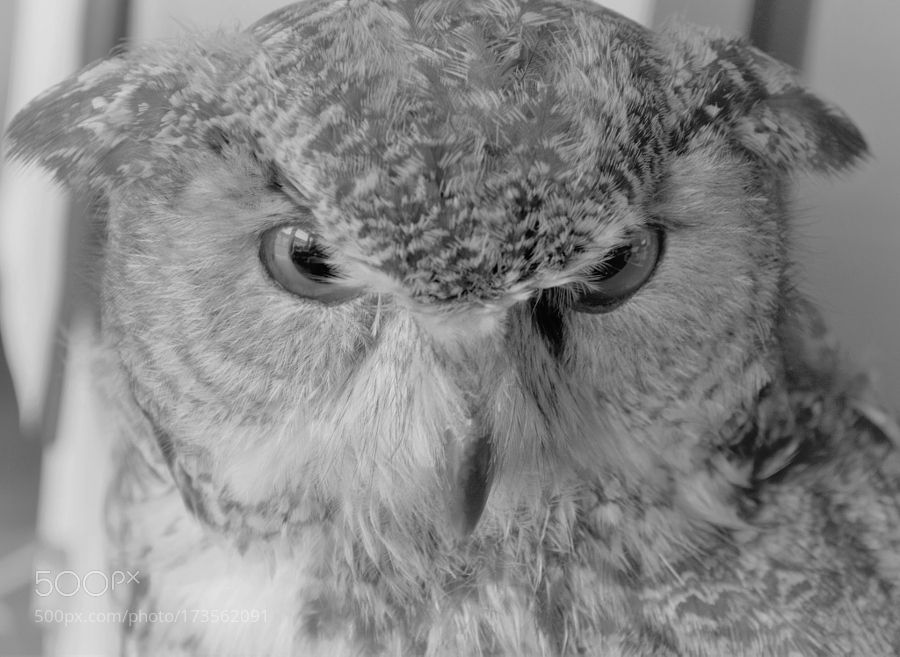 OWL by zyichun2011