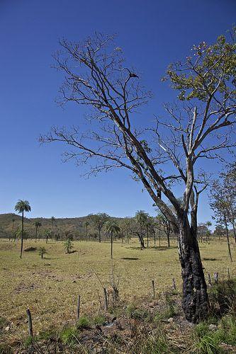 Cerrado De Goias Com Imagens Turismo Vegetacao Brasil