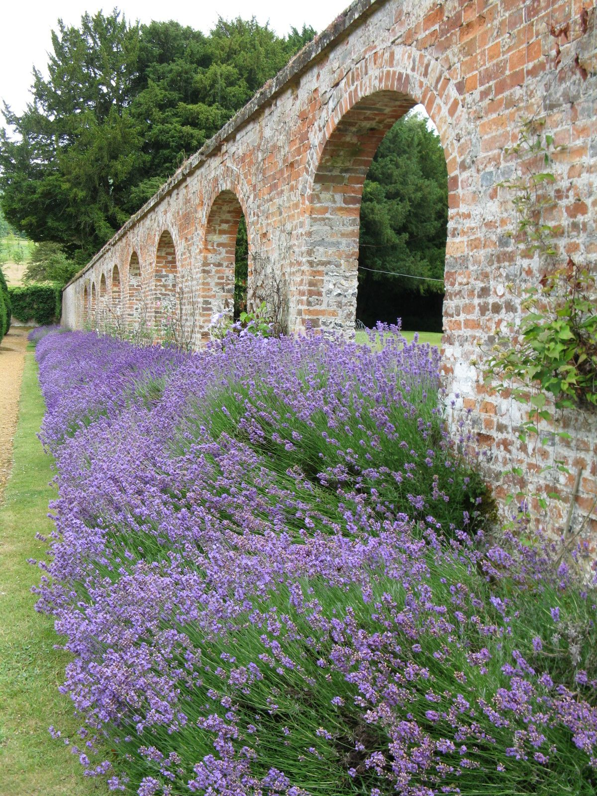 fragrant lavender along old brick wall in the garden at on brick wall id=27019