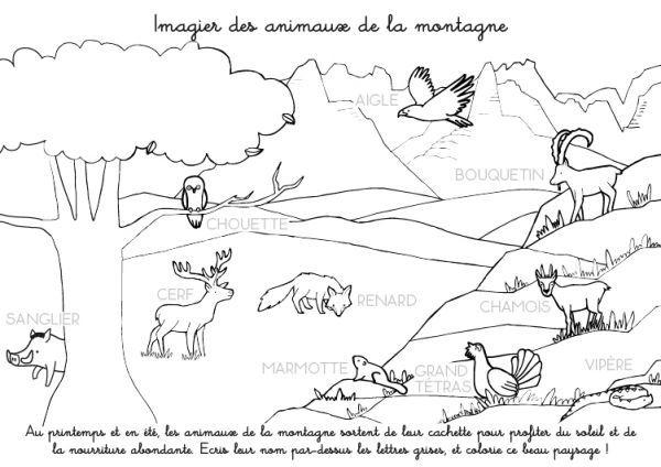 Coloriage A Imprimer Imagier Des Animaux De La Montagne Coloriage Foret Coloriage Coloriage A Imprimer