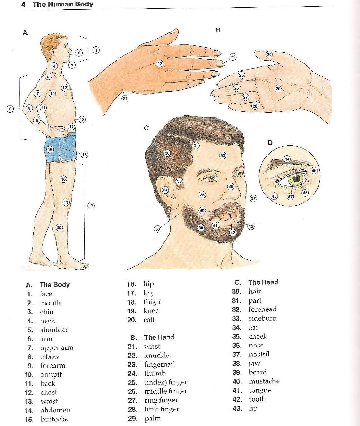 Oxford english picture dictionary diccionario en ingles ilustrado ...