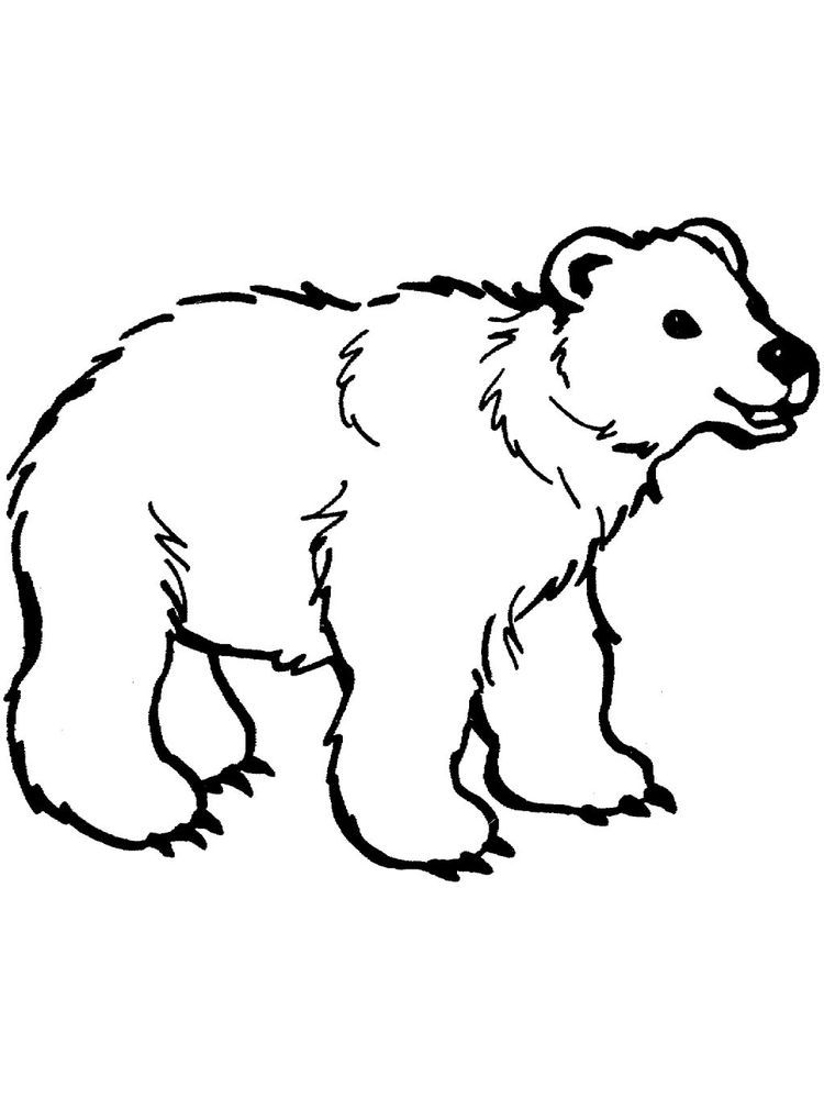 Bear Coloring Pages To Print The Following Is Our Bear Coloring Page Collection You Are Fr Polar Bear Coloring Page Bear Coloring Pages Animal Coloring Pages