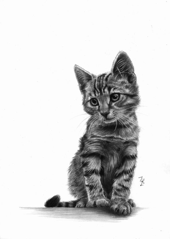 Kitty - PENCIL DRAWING Canvas Print by Thubakabra
