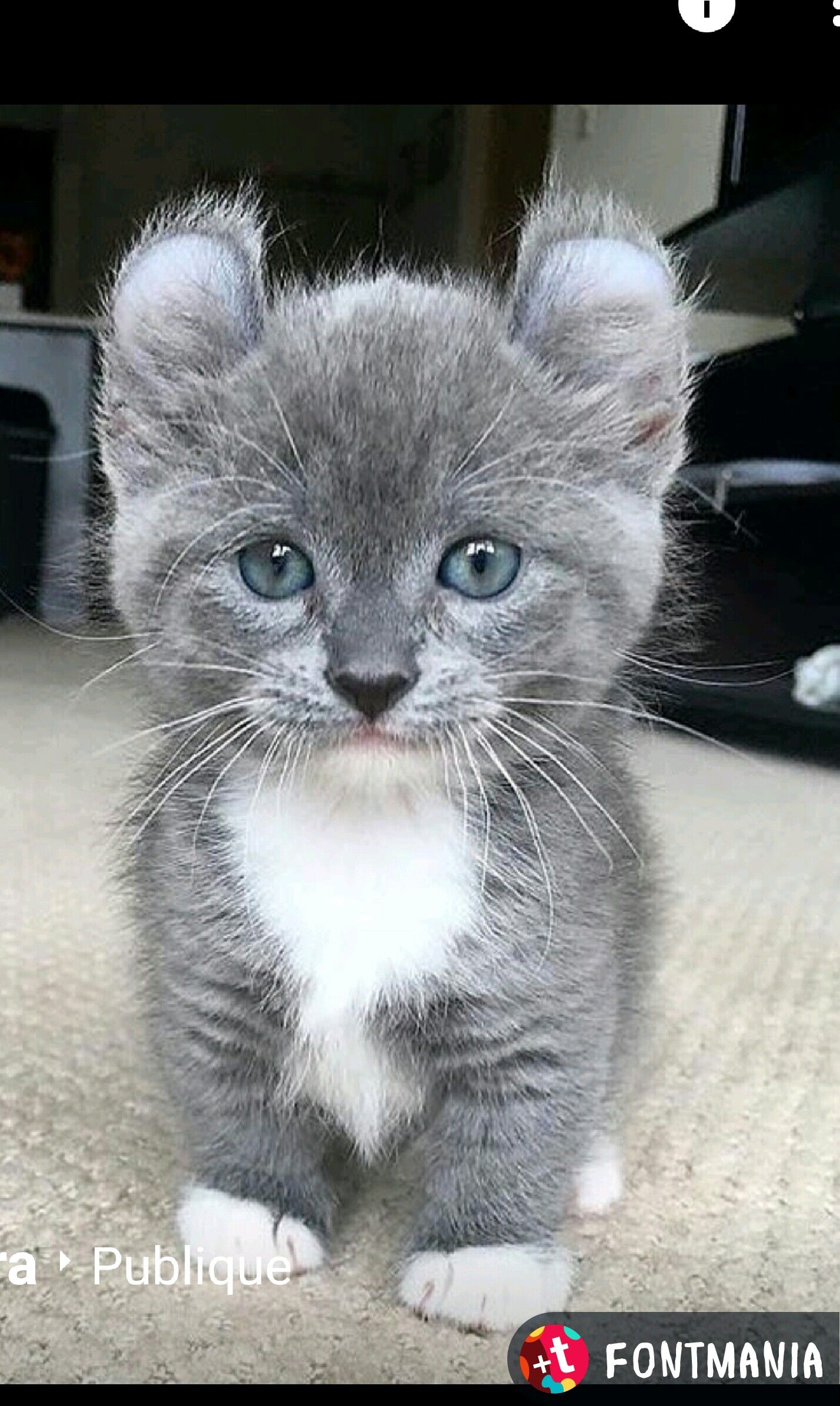 Omg So Freakin Cute Cute Cats Cute Cats And Kittens Baby Cats