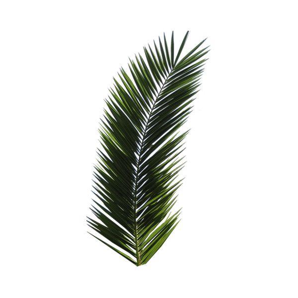 Palm Trees Png 781 Png Palm Tree Png Palm Tree Leaves Palm Tree Tattoo