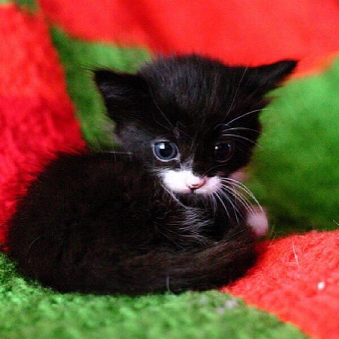a Cute kittens Pinterest
