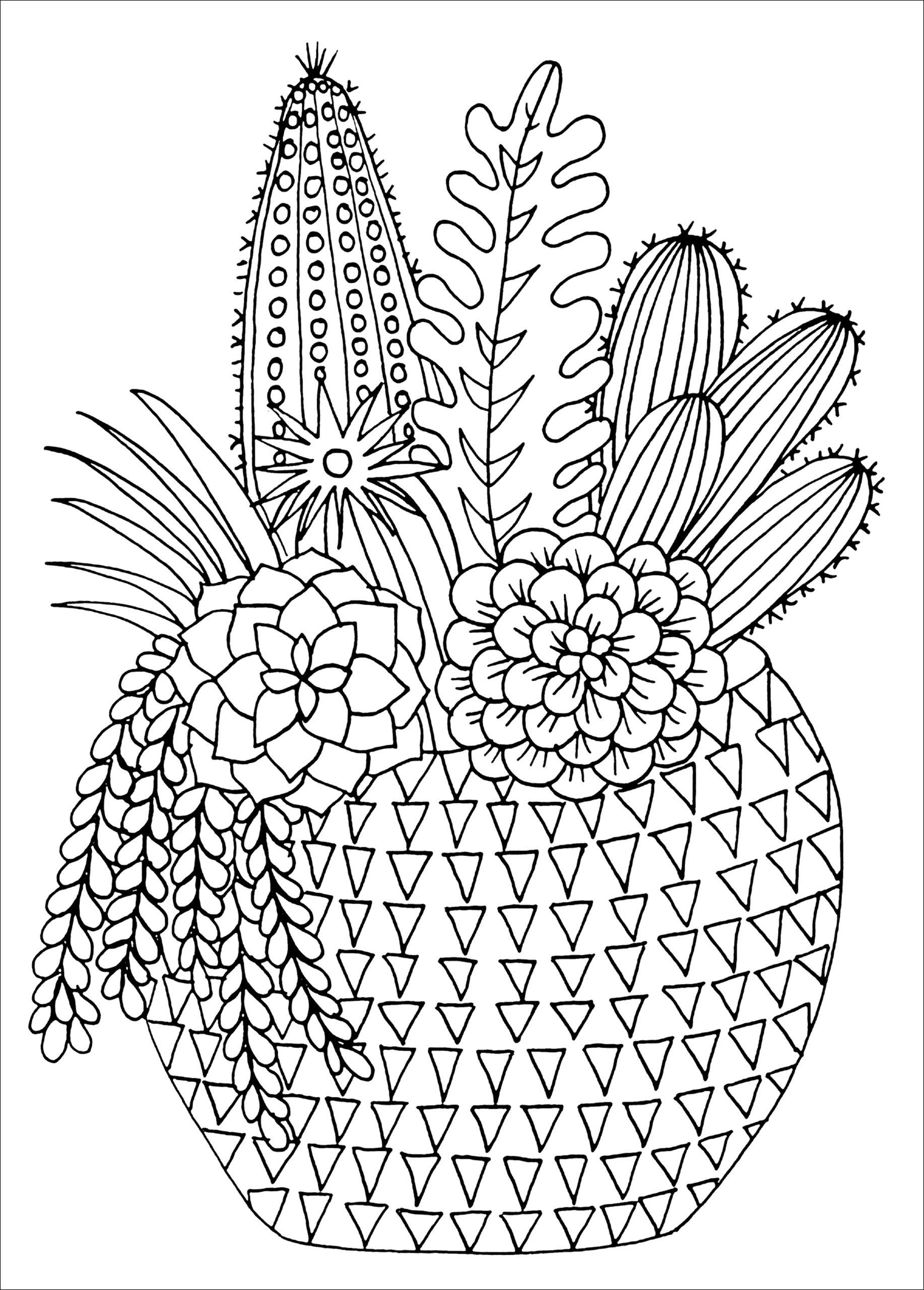 Amazon Succulents Portable Adult Coloring Book 31 Stress Relieving Designs
