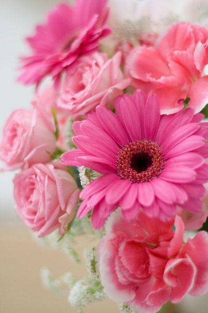 すべての花の画像 ベスト50 ピンク ガーベラ 壁紙 Iphone