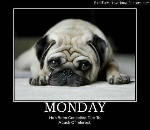 Cool Pug Canine Adorable Dog - 29974e02e19732456961772288257dda  Photograph_507642  .jpg