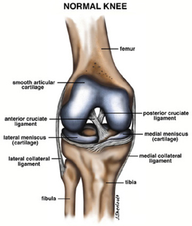 can diet weakened knee tendons and ligaments