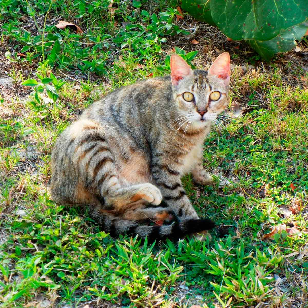 How to Keep Stray Cats Out of Your Yard | Cats, Fleas, Buy ...