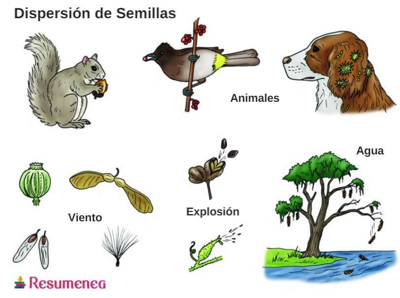 En Que Consiste La Dispersion De Semillas Resumen Y Caracteristicas Dispersion De Semillas Semillas Semillas De Plantas