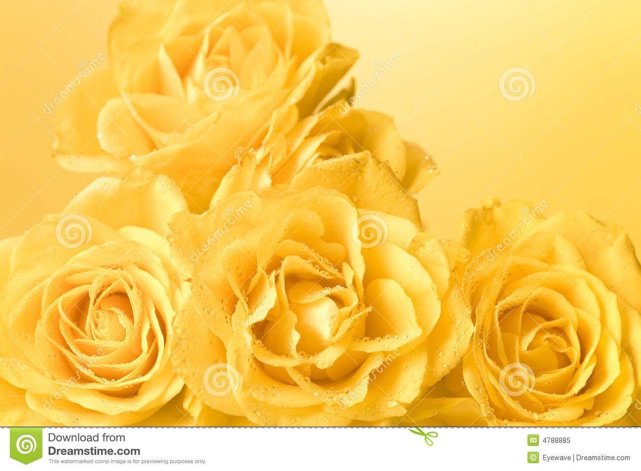 Yellow Rose Flowers Wallpapers The Best Flowers Ideas Hd