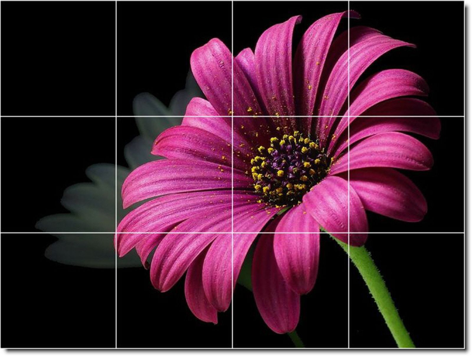 http://www.picture-tiles.com/catalog/images/800/flowers_photo8_0072_43.jpg