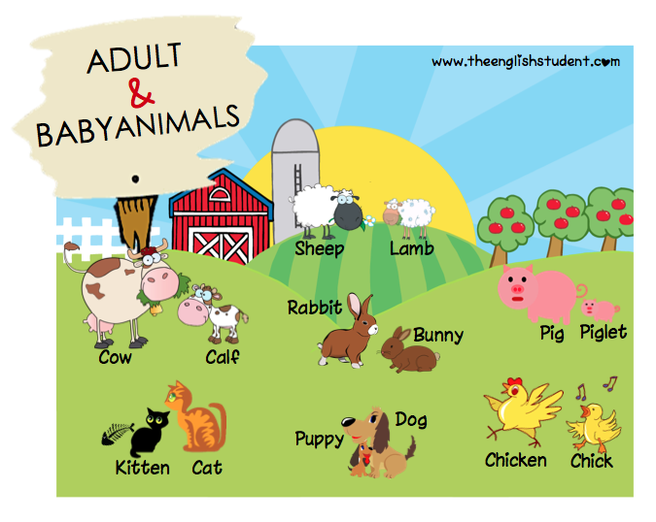 Baby Animals The English Student Baby Animal Names Baby Farm Animals Baby Animals