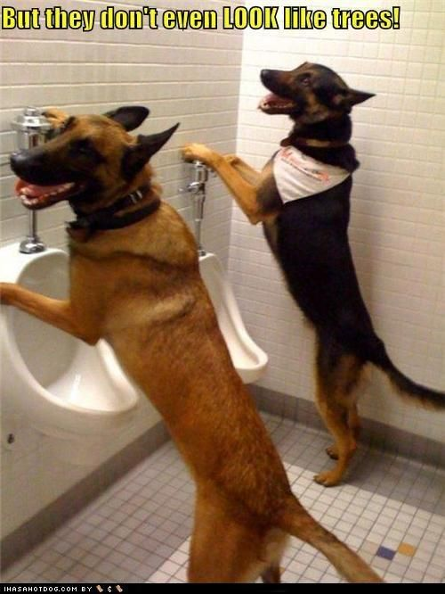 These guys are certainly humanising themselves aren't they? These are two well trained dogs after a few beers but I wouldn't pick a fight with them. Would you?