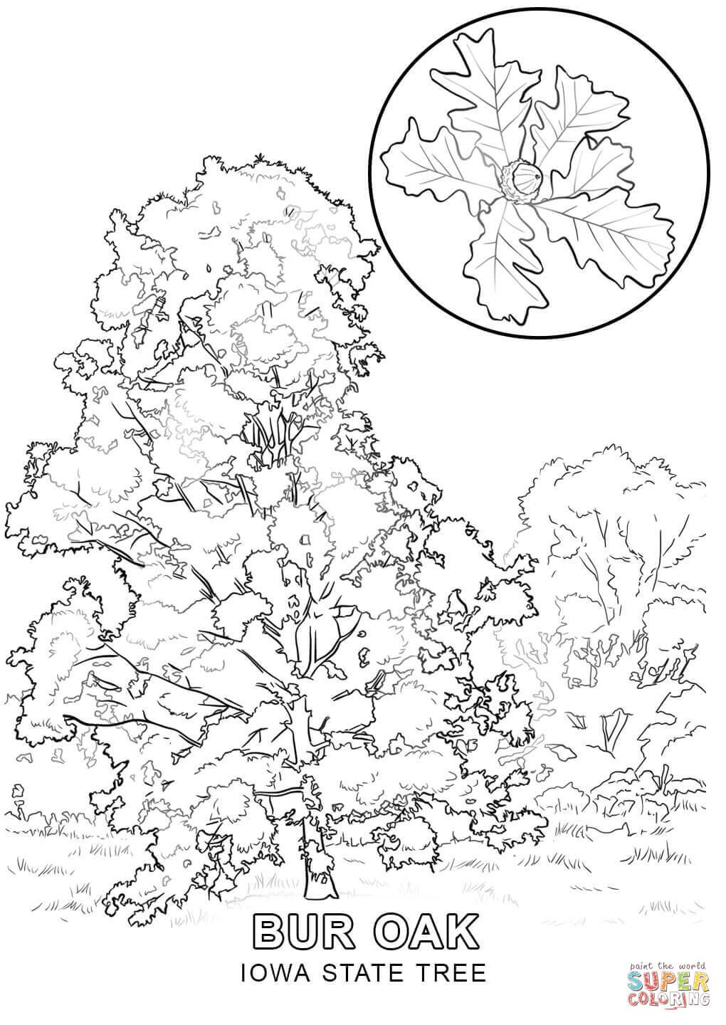 iowa-state-tree-coloring-page.jpg (1020×1440)   coloring pages ...