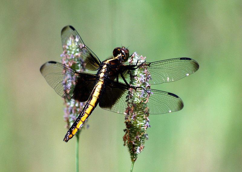 #dragonfly #michigan