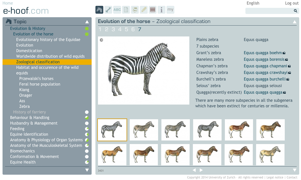 Evolution of the horse - Zoological classification | e-hoof.com ...
