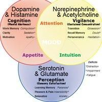 Altered dopamine signaling a clue to autism - Prohealth