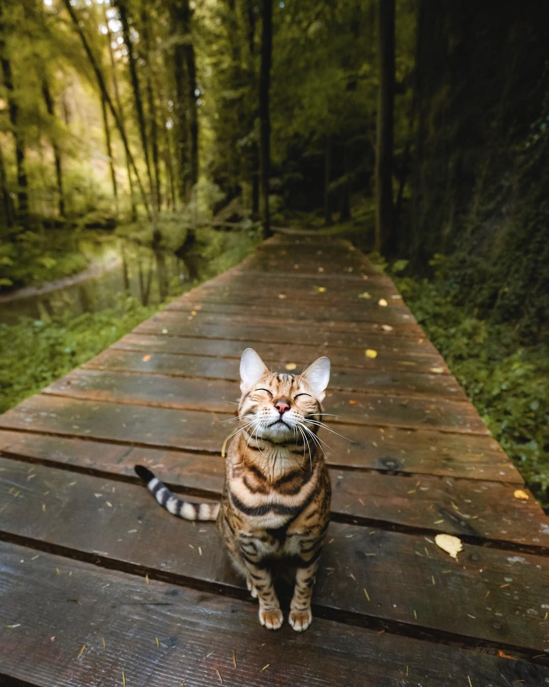The Forest Air Smells Wild Cute Cats Beautiful Cats Animals