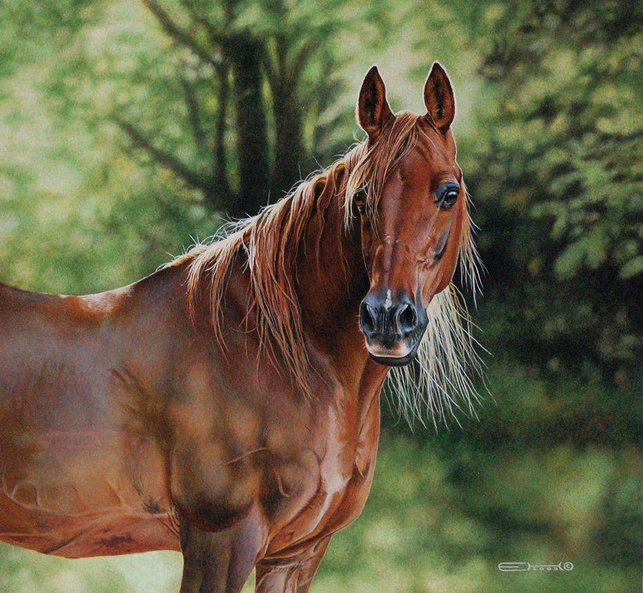 Arabian Horse by Esther van Hulsen