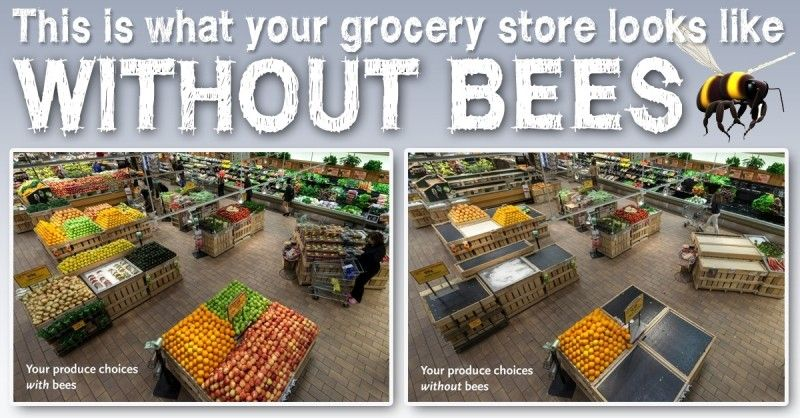 One of every three bites of food comes from plants pollinated by honeybees and other pollinators. Yet, major declines in bee populations threaten the availability of many fresh ingredients consumers rely on for their dinner tables.