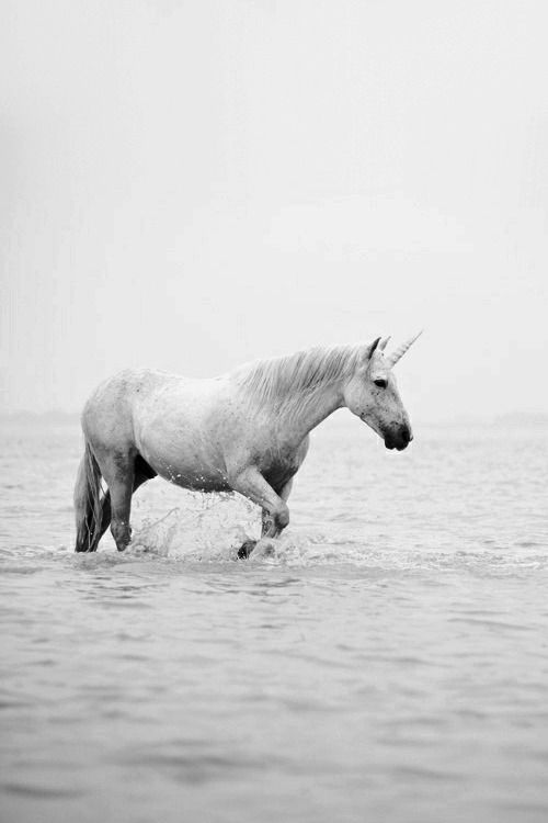 Unicorn standing in the water