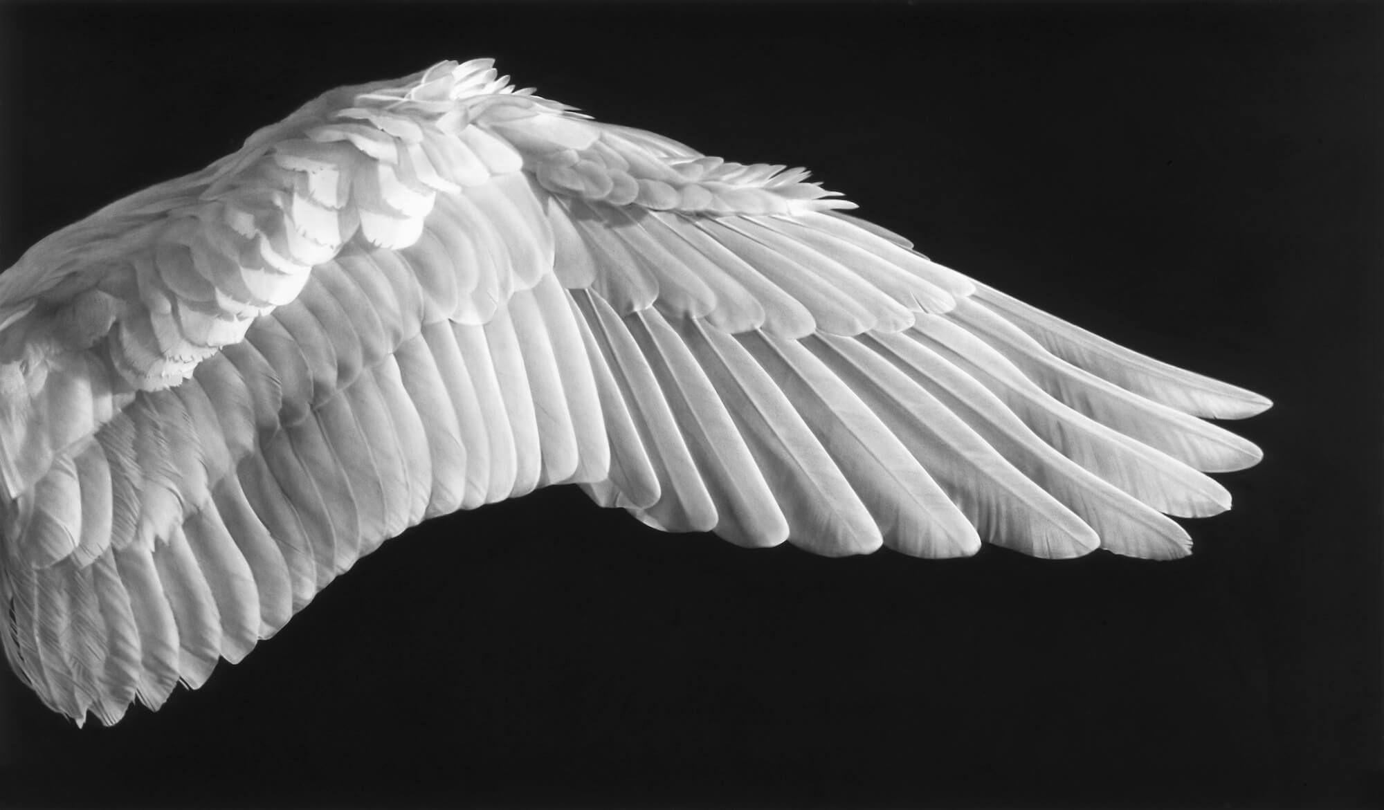 слоги крыло птицы фотографии это комплекс положительных