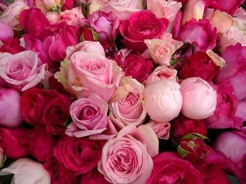 (18) Tumblr in Flowers