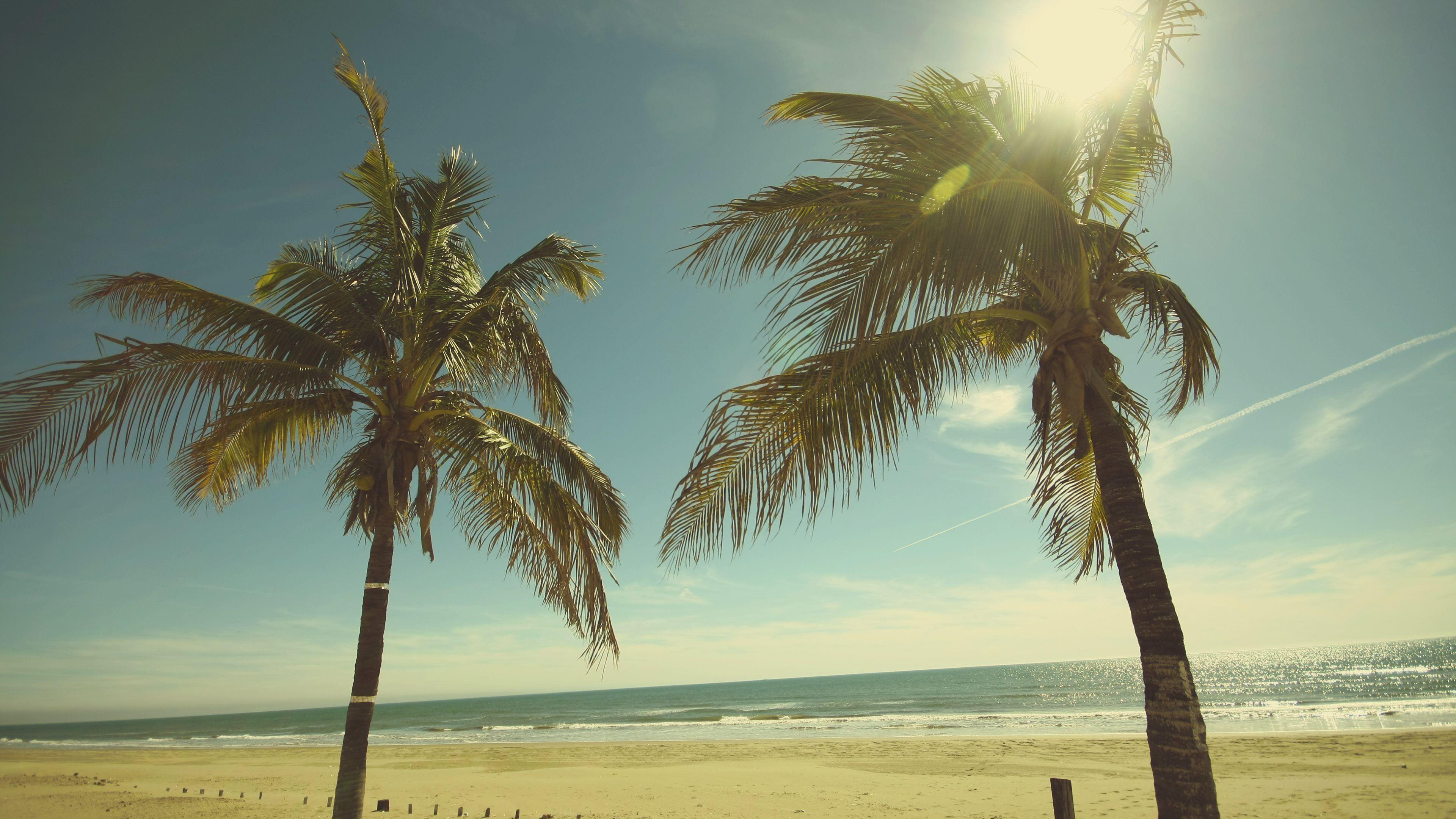 sunny+palm+trees+beach+sand_ultra+hd (3840×2160) | 나무