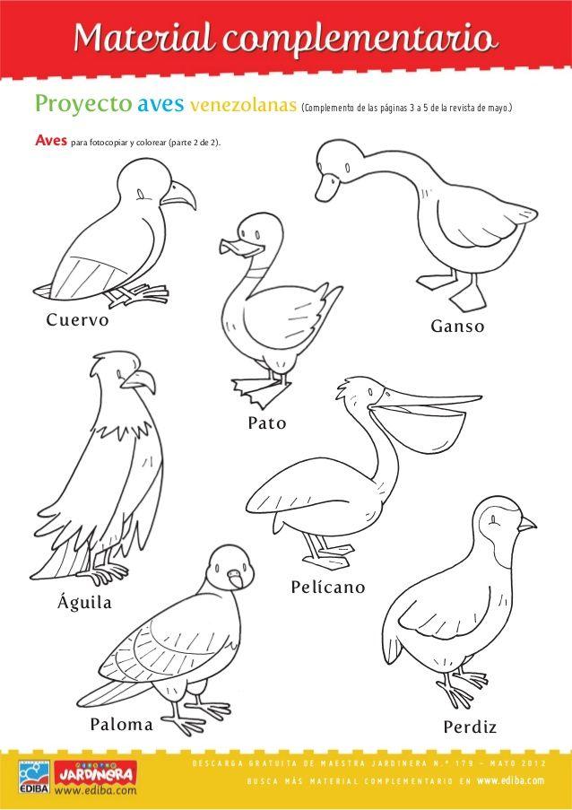 Resultado de imagen para DIBUJO DE AVES | Animales y Plantas ...