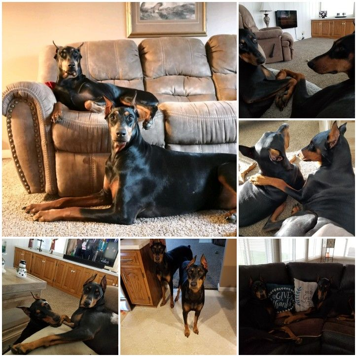 Pin by Kelly Jo on Sadie and Rocco Home decor, Furniture