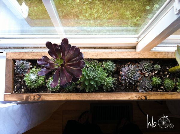 Diy Idea Make A 10 Minute Succulent Windowsill Box Curbly Diy Design Community Windowsill Garden Window Box Window Sill Planter Box