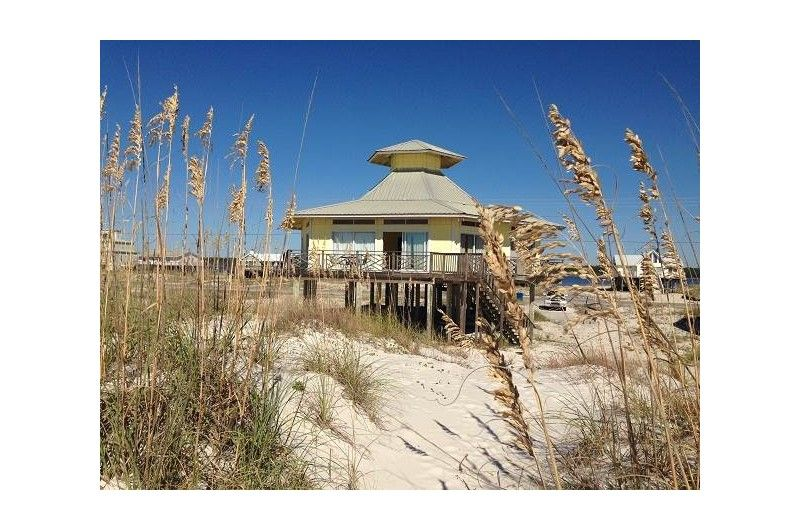 This 2 Bedroom Gulf Front Vacation Home In Gulf Shores Is Pet Friendly Gulf Shores Alabama Vacation Rentals Gulf Shores Alabama Vacation Pet Friendly Beach