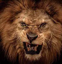 В нашей базе найдено Скачать картинки злой лев. | Лев ...