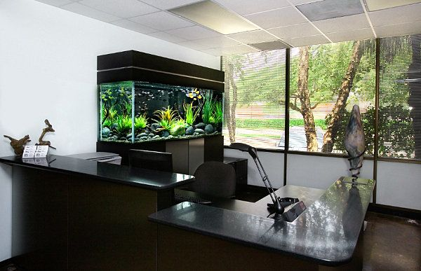 Black aquarium for the office Aquariums Fish tanks and Aquarium