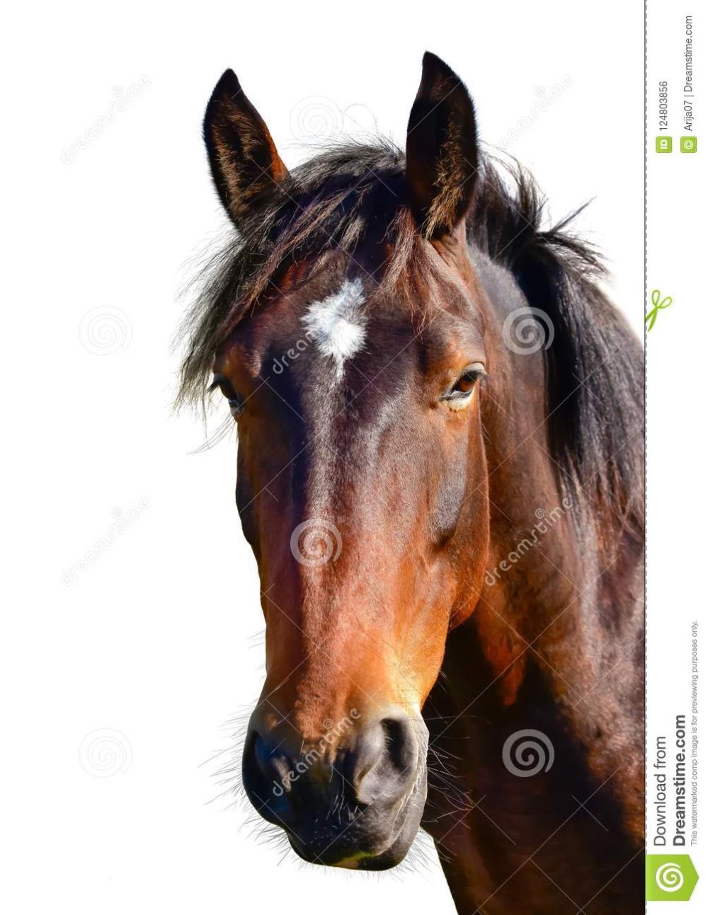 Horse Head Google Kereses Brown Horse Art Horses Brown Horse