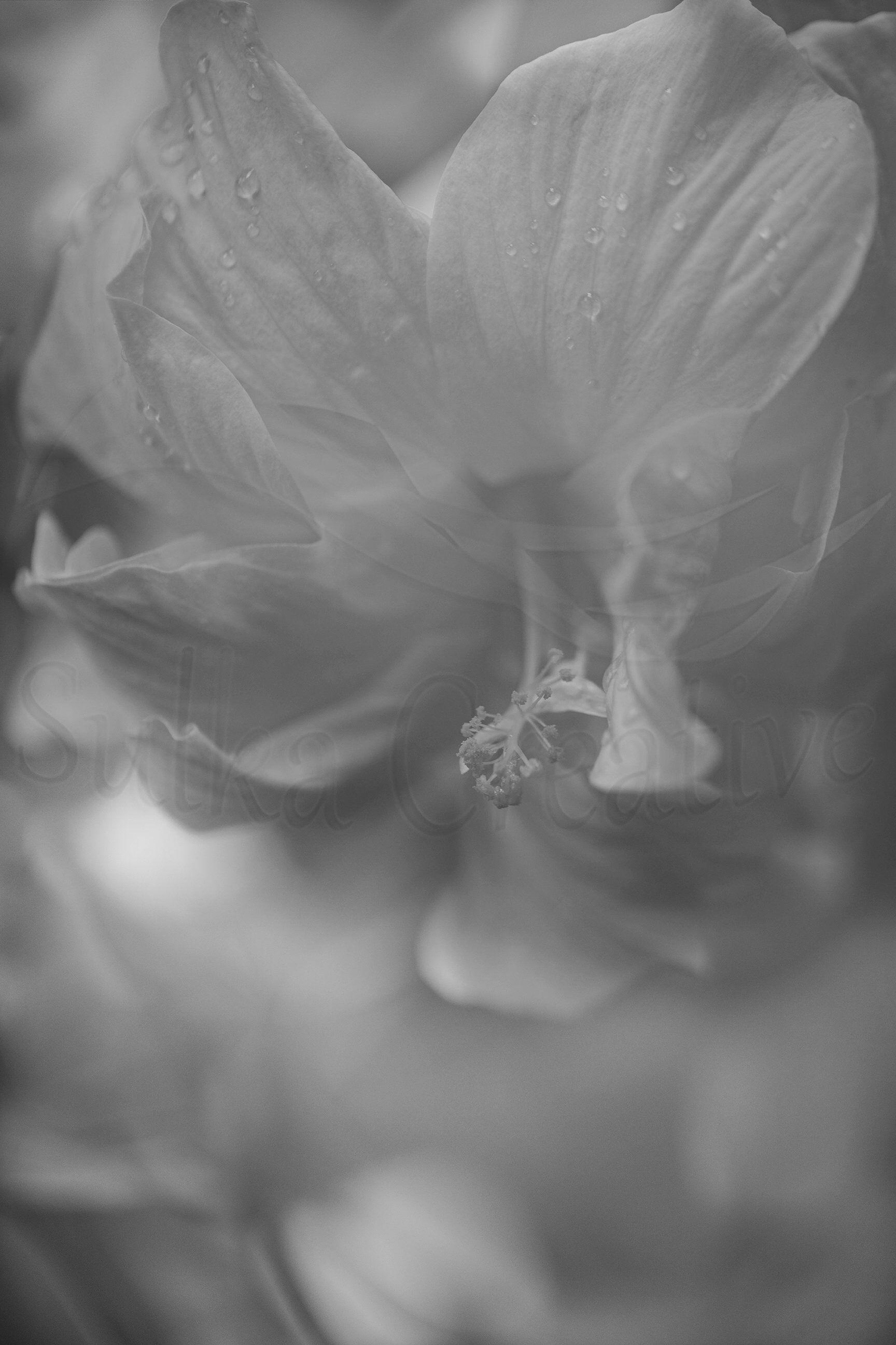 Printable Black And White Hazy Flower Photography Etsy Art Print Digital Black White Flowers Verti Flowers Photography White Hibiscus Hibiscus Flowers