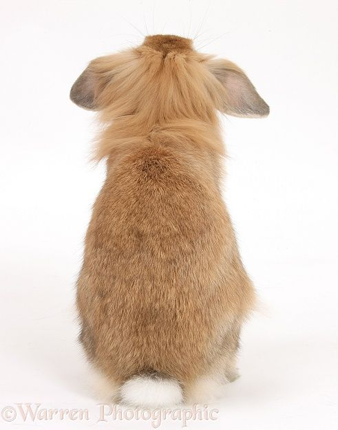 Another great bunny do in the back  ) Animal Rumps Lol - resume rabbit cost