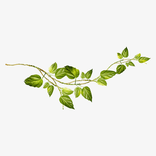 Vine And Branches Png Transparent Vine And Branches Png Vine And Branches Vine Drawing Plant Drawing