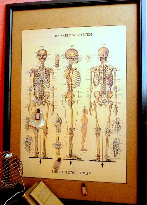 Vintage Style Anatomy Chart Print Wall Decor Memo Board 27x39 Office College Guys Men Boys Fathers Day Doctors