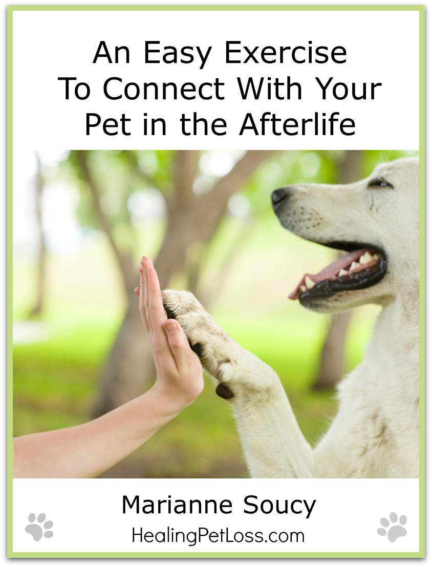 An Easy Exercise To Connect With Your Pet In The Afterlife My Dog Died Death Of A Pet Dog Died