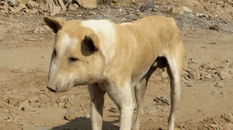 When An Animal Rescue Center Was Informed About A Stray Dog Wandering A Rural Area Read More Animal Humor Dog Street Dogs Animal Rescue Center