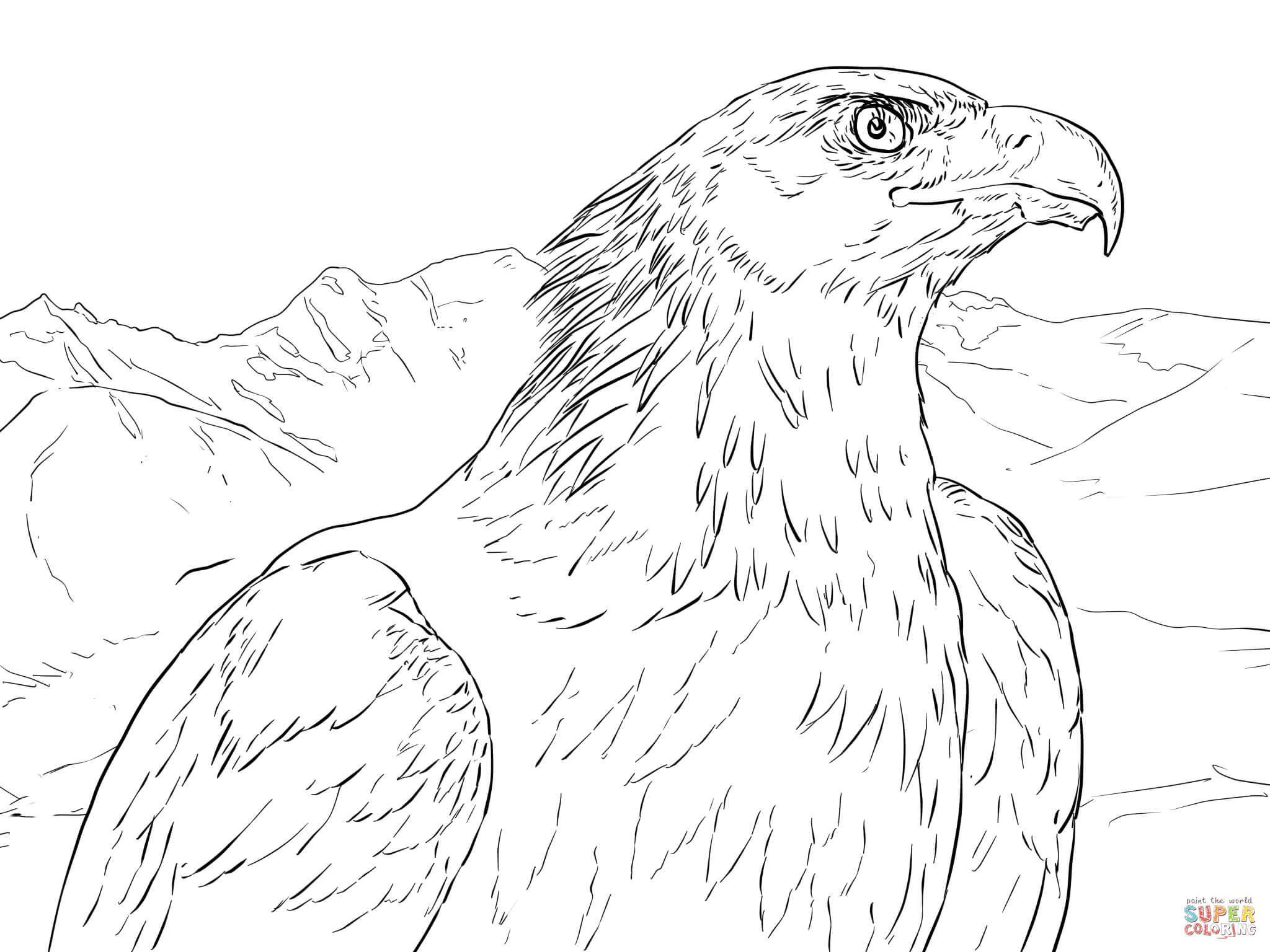 Golden Eagle Portrait Super Coloring Coloring Pages Leopard Drawing Animal Coloring Pages