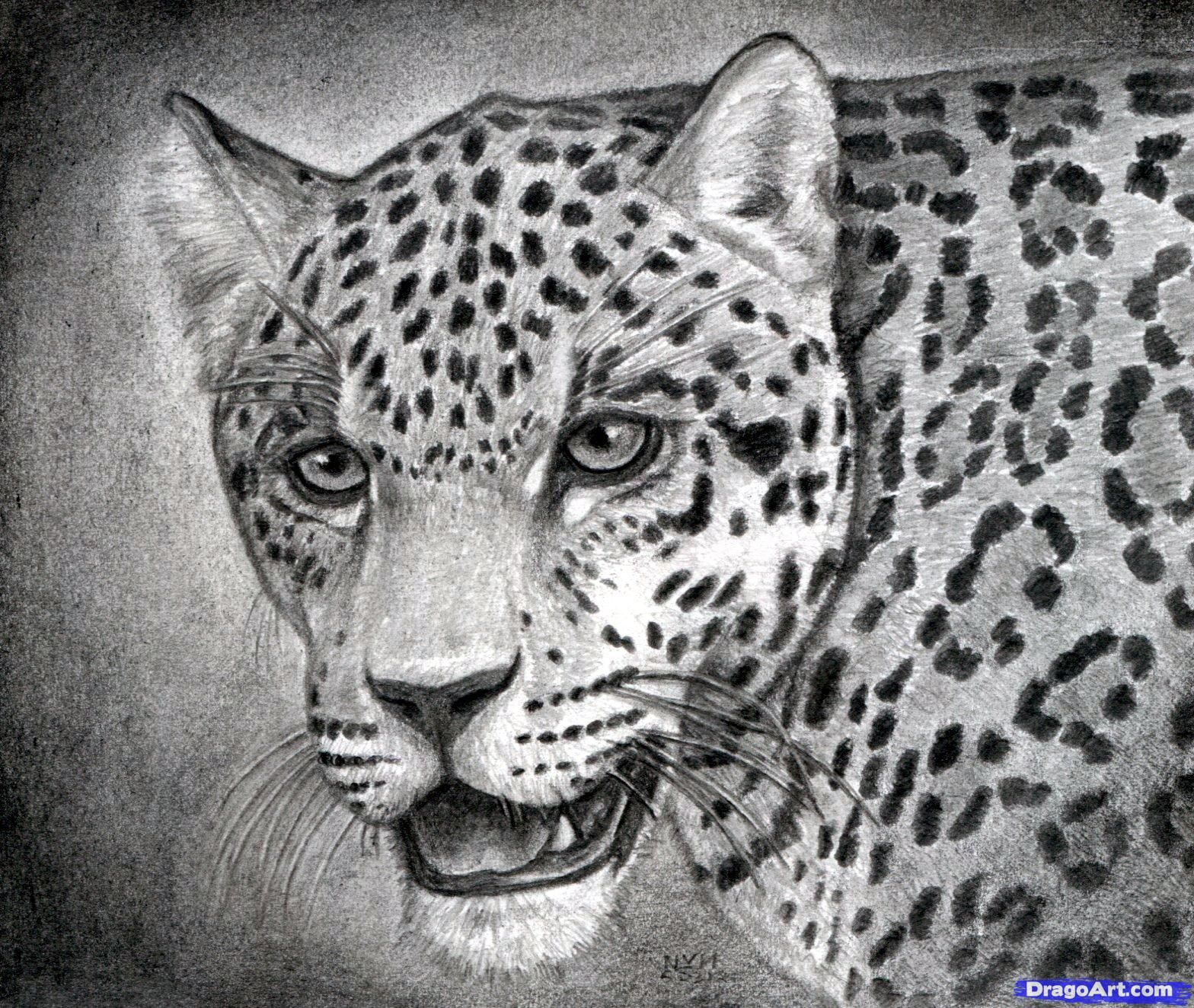 Step By Step Drawing Realistic  How To Draw A Realistic Jaguar