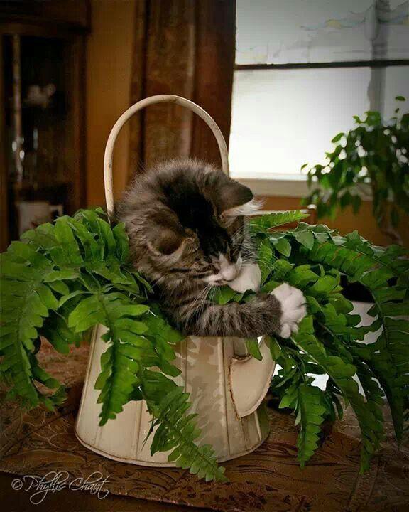 Plantwrecker