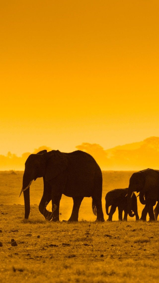 Sunset elephants iphone 5 wallpapers backgrounds 640 x - Elephant background iphone ...