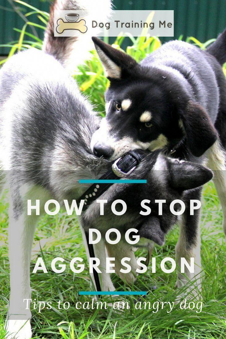 How To Train A Dominant Dog Aggressive Dog Dog Training Dog